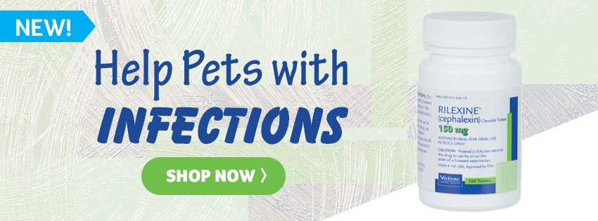 Help Pets with Infections