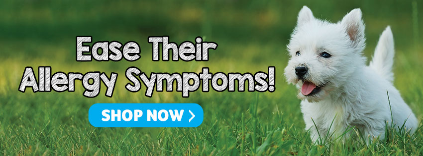 Ease Their Allergy Symptoms!