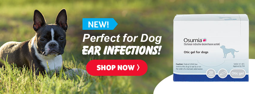 Perfect for Dog Ear Infections!