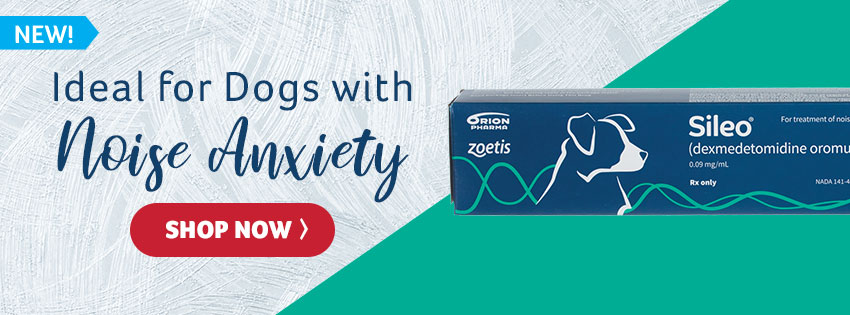 Ideal for Dogs with Noise Anxiety