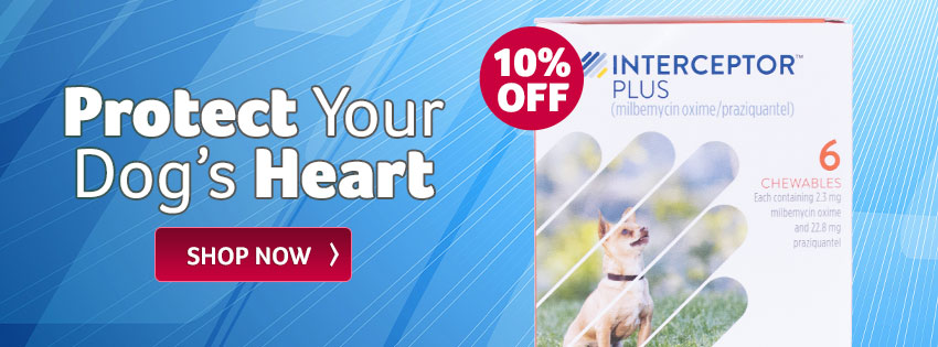 Protect Your Dog's Heart