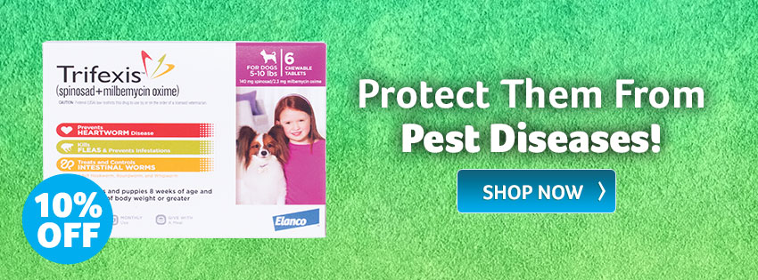 Protect Them From Pest Diseases!