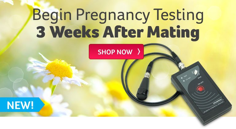 Begin Pregnancy Testing 3 Weeks After Mating